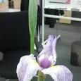 2009/06/01-05
