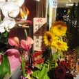 パーティを飾った花⑭/「D2C」10周年